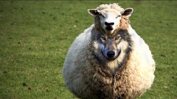 De los lobos cuidando las ovejas(II)